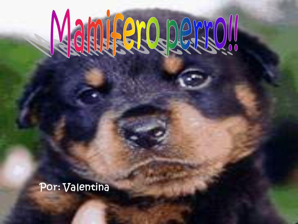Mamifero perro!! Por: Valentina