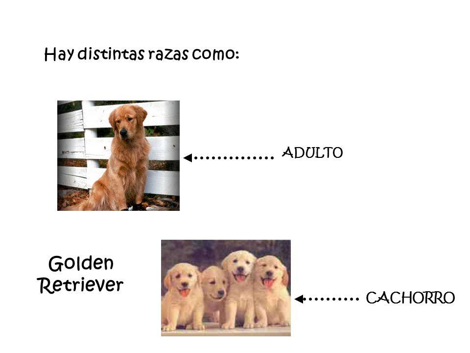 Hay distintas razas como: