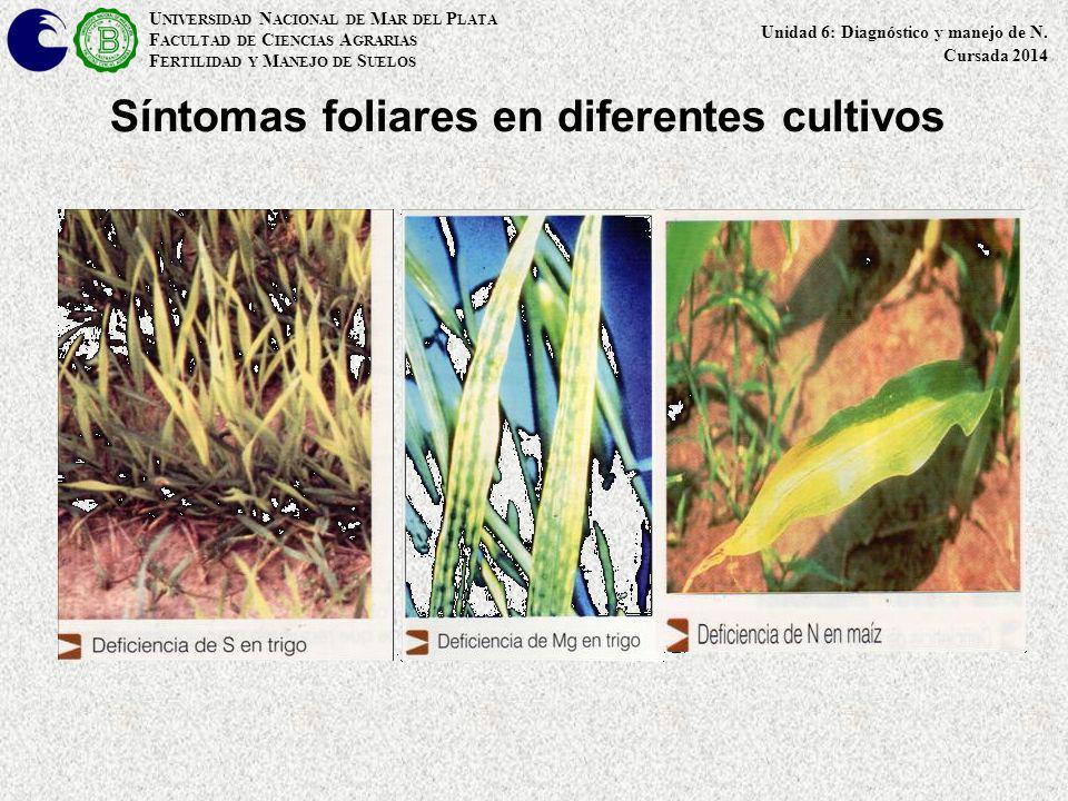Síntomas foliares en diferentes cultivos