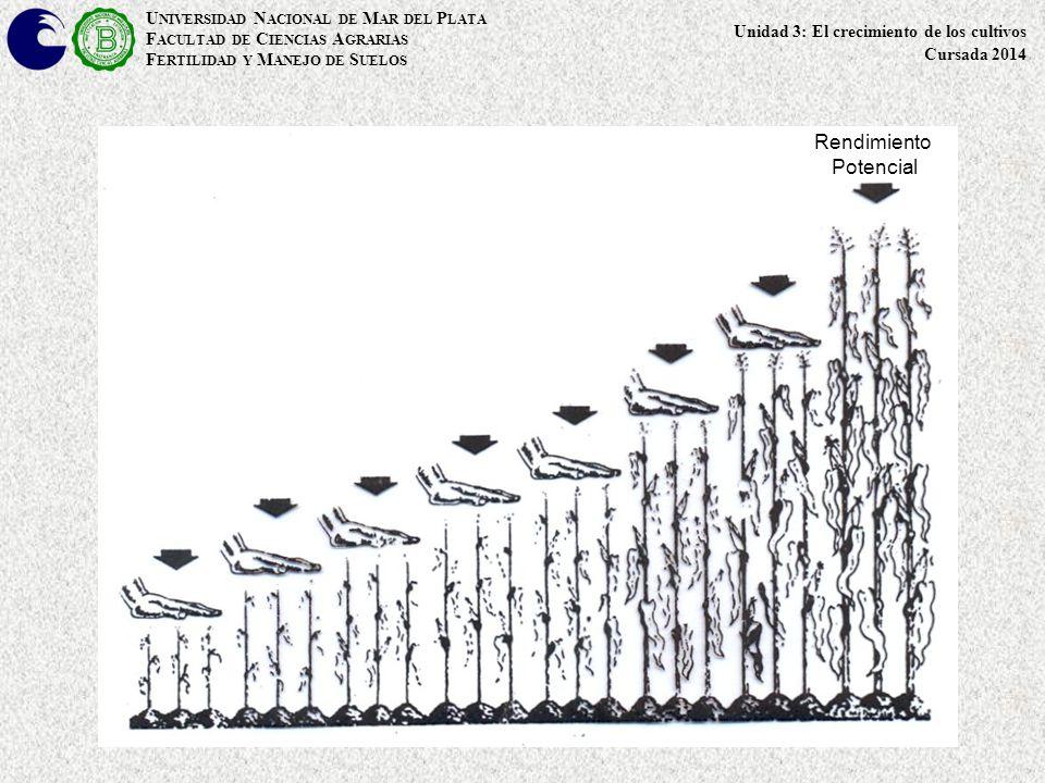 Rendimiento Potencial UNIVERSIDAD NACIONAL DE MAR DEL PLATA