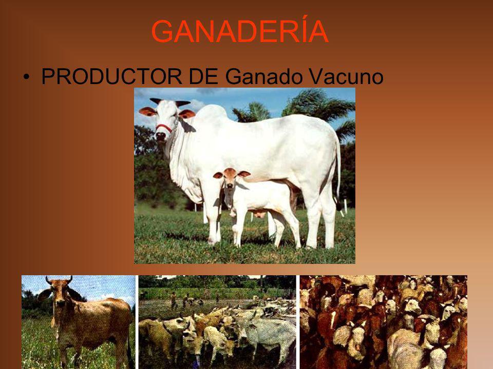 GANADERÍA PRODUCTOR DE Ganado Vacuno MIAB