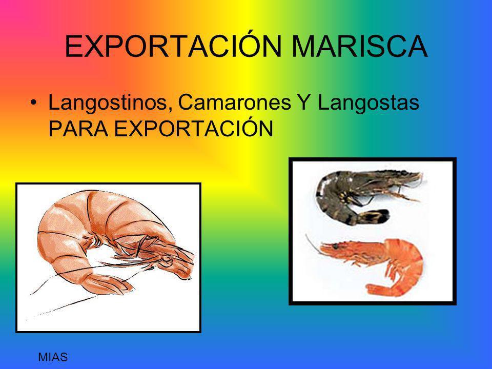 EXPORTACIÓN MARISCA Langostinos, Camarones Y Langostas PARA EXPORTACIÓN MIAS