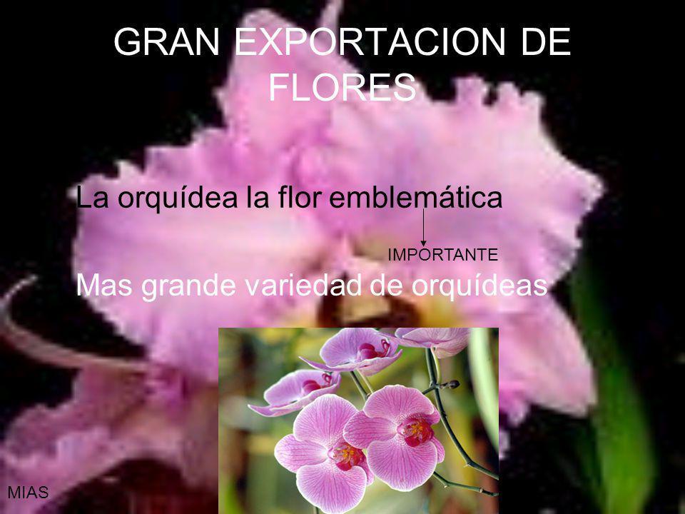 GRAN EXPORTACION DE FLORES