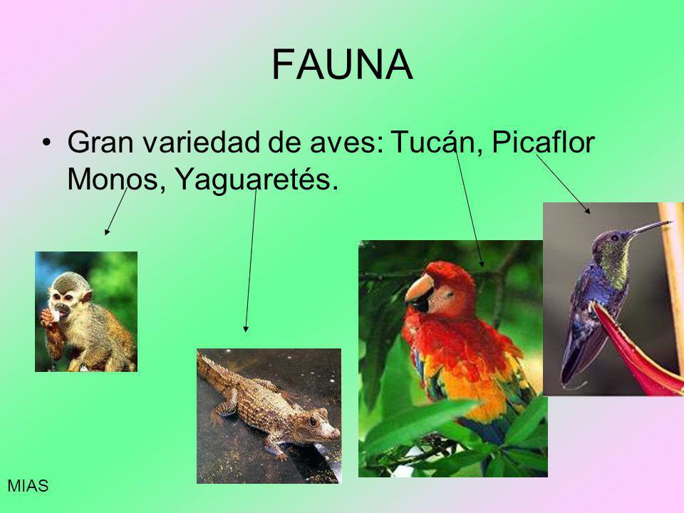 FAUNA Gran variedad de aves: Tucán, Picaflor Monos, Yaguaretés. MIAS