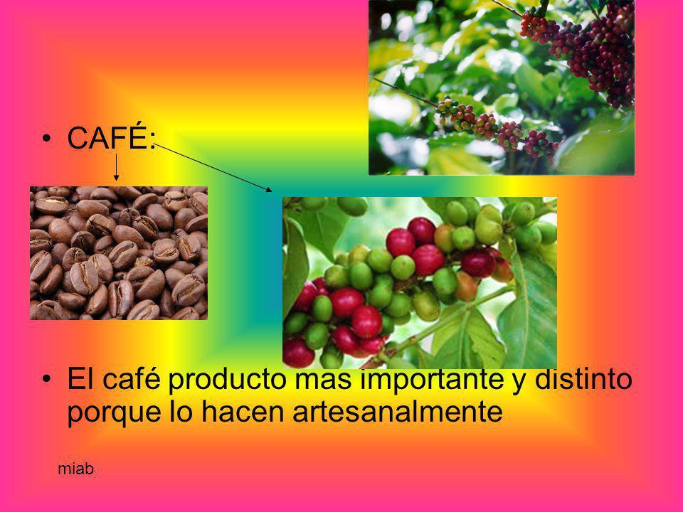 CAFÉ: El café producto mas importante y distinto porque lo hacen artesanalmente miab