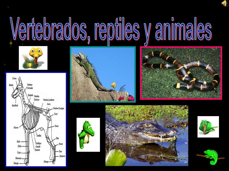 Vertebrados, reptiles y animales