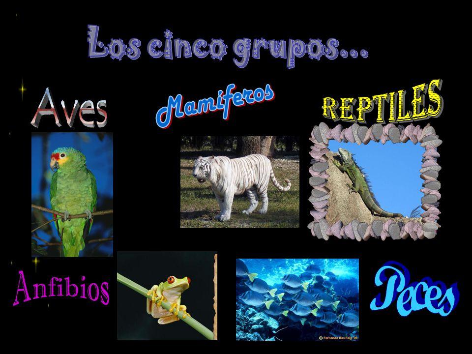 Los cinco grupos... Reptiles Aves Mamíferos Peces Anfibios