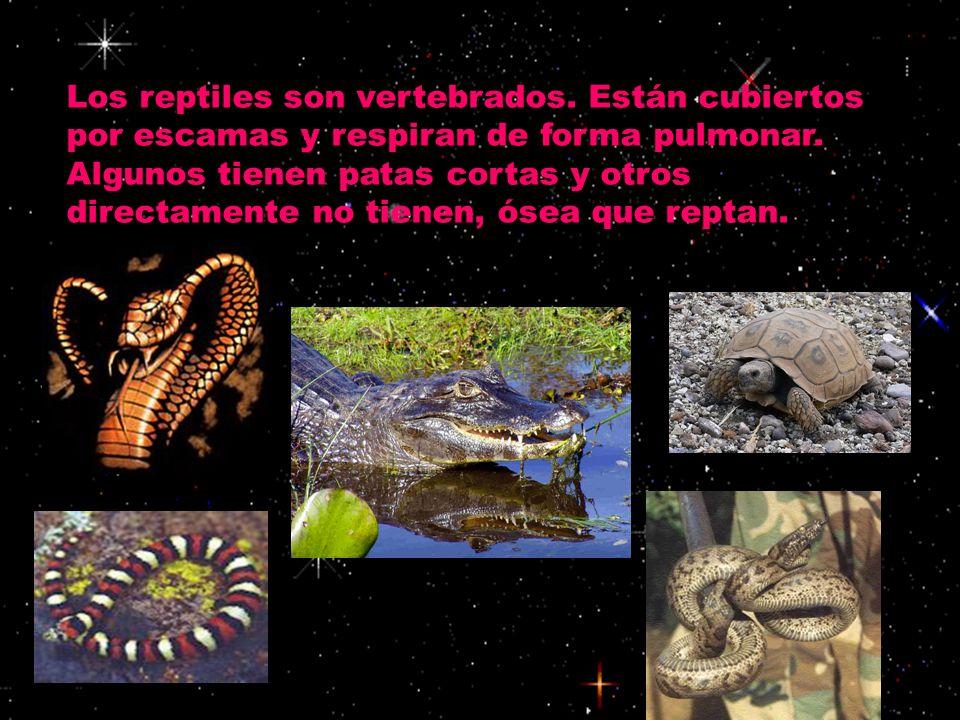 Los reptiles son vertebrados