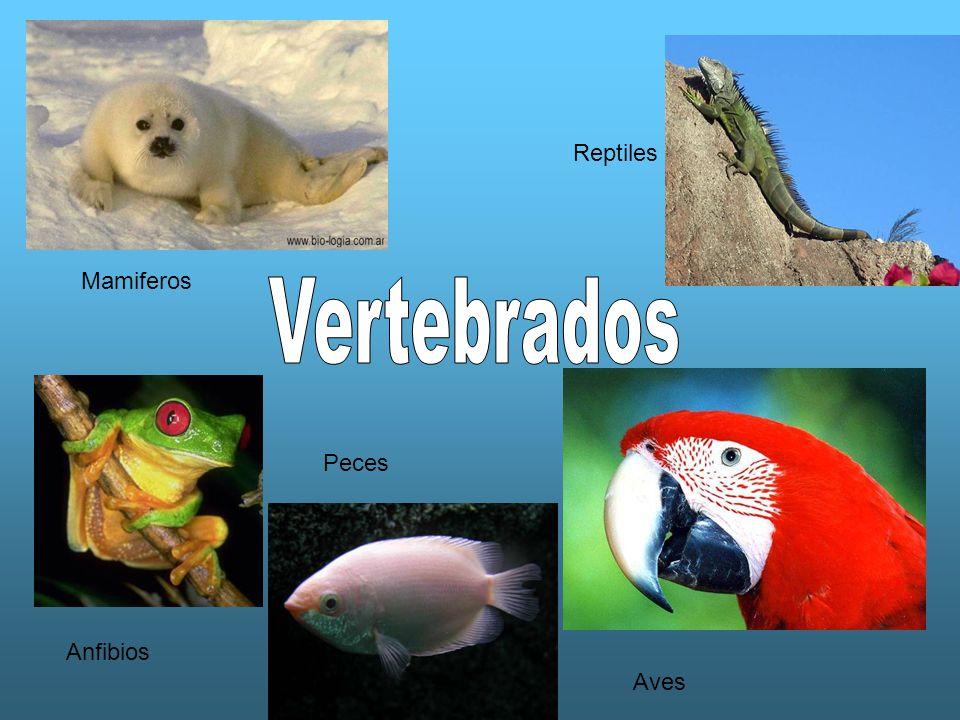 Reptiles Mamiferos Vertebrados Peces Anfibios Aves