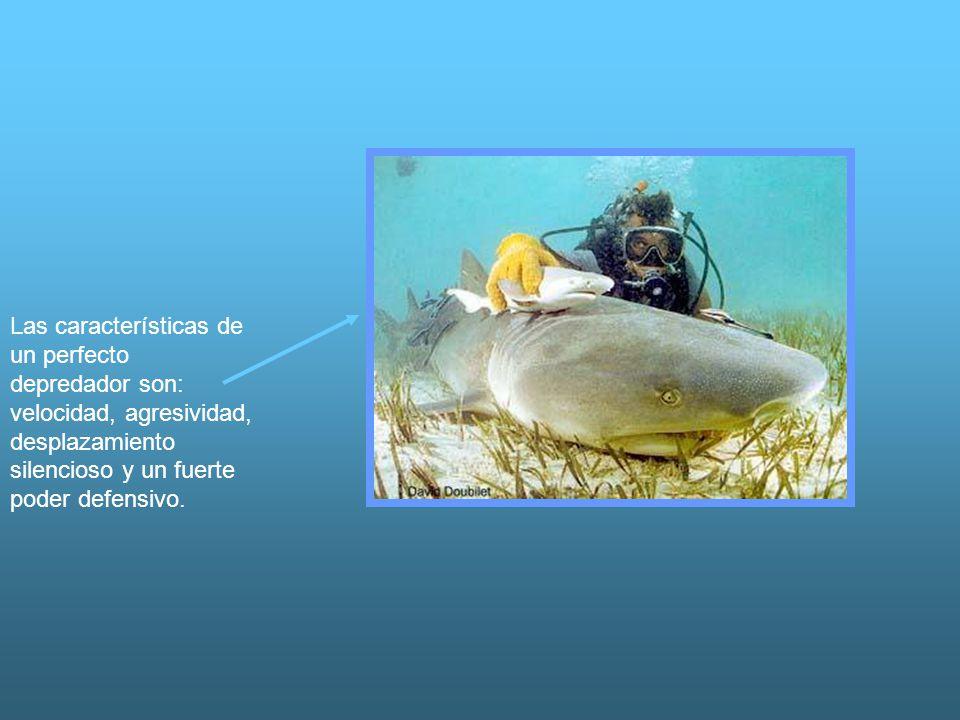 Las características de un perfecto depredador son: velocidad, agresividad, desplazamiento silencioso y un fuerte poder defensivo.