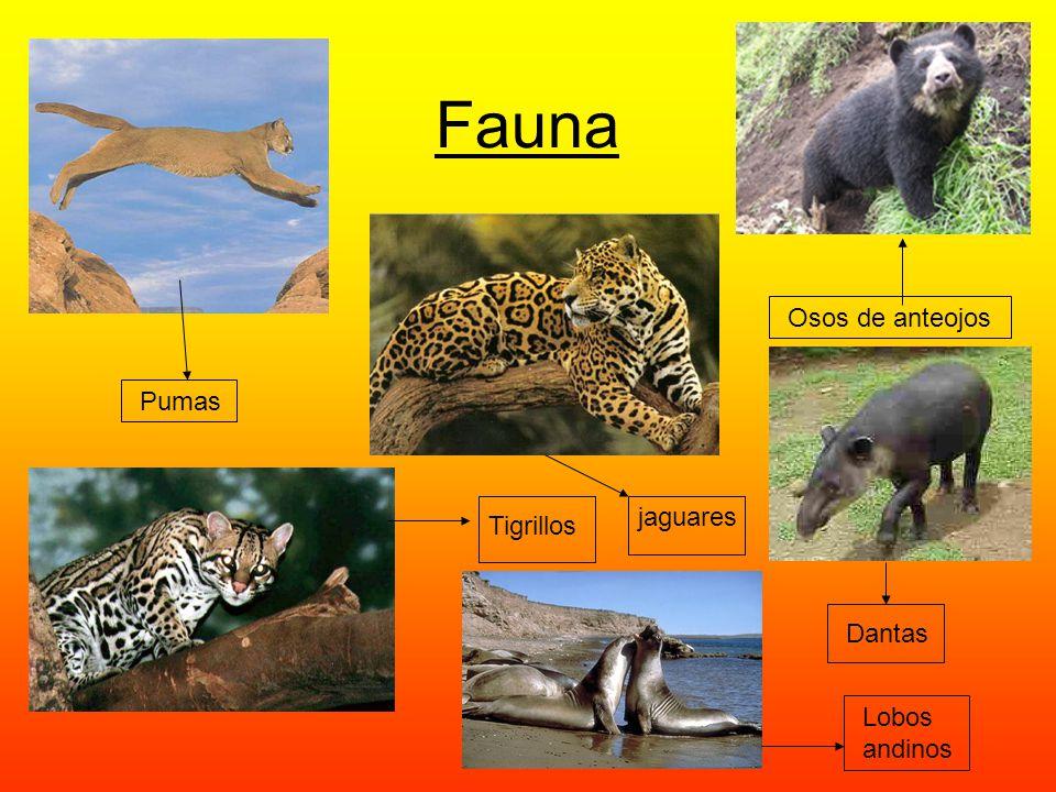 Fauna Osos de anteojos Pumas jaguares Tigrillos Dantas Lobos andinos