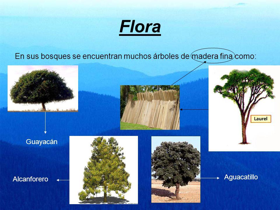 Flora En sus bosques se encuentran muchos árboles de madera fina como: