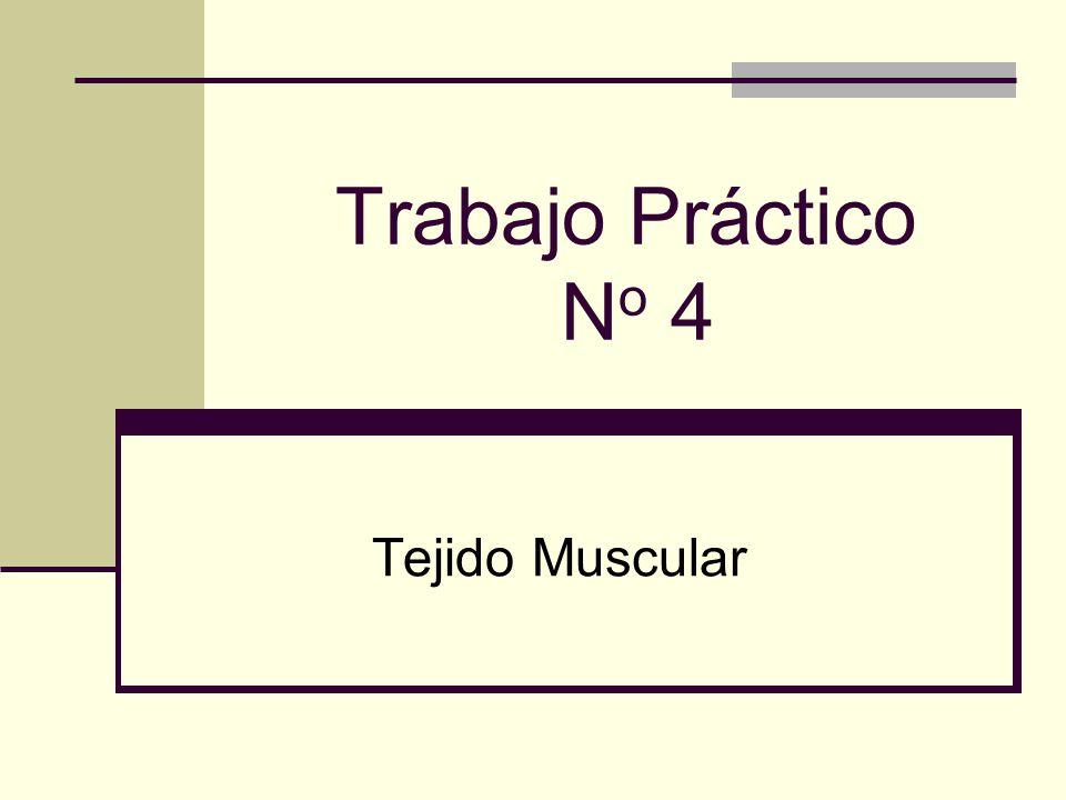 Trabajo Práctico No 4 Tejido Muscular