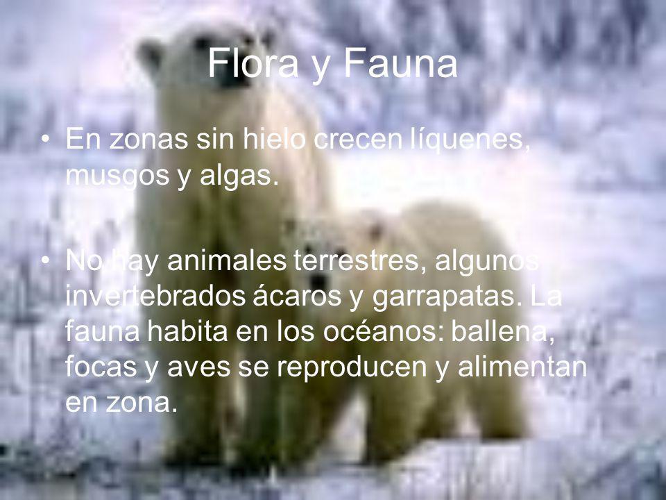 Flora y Fauna En zonas sin hielo crecen líquenes, musgos y algas.
