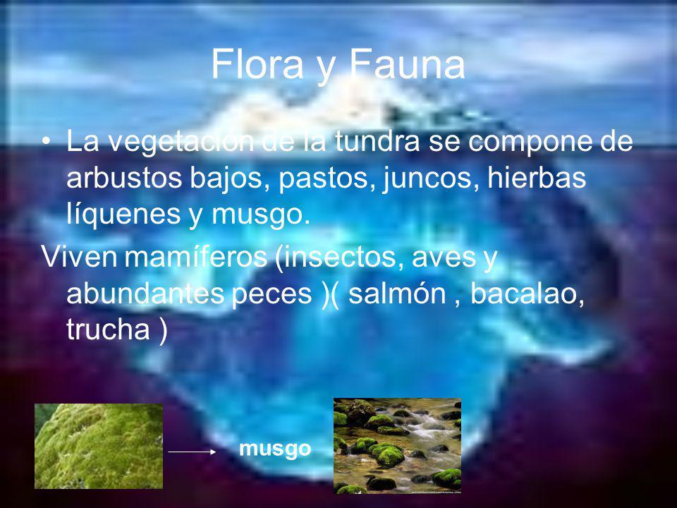 Flora y Fauna La vegetación de la tundra se compone de arbustos bajos, pastos, juncos, hierbas líquenes y musgo.