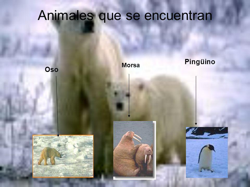 Animales que se encuentran