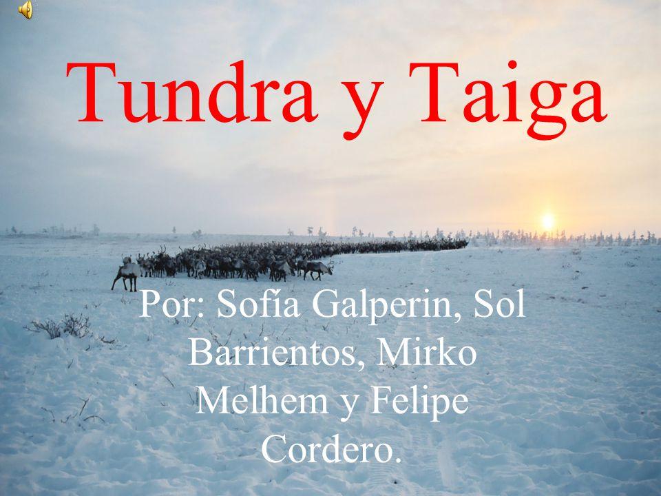 Por: Sofía Galperin, Sol Barrientos, Mirko Melhem y Felipe Cordero.
