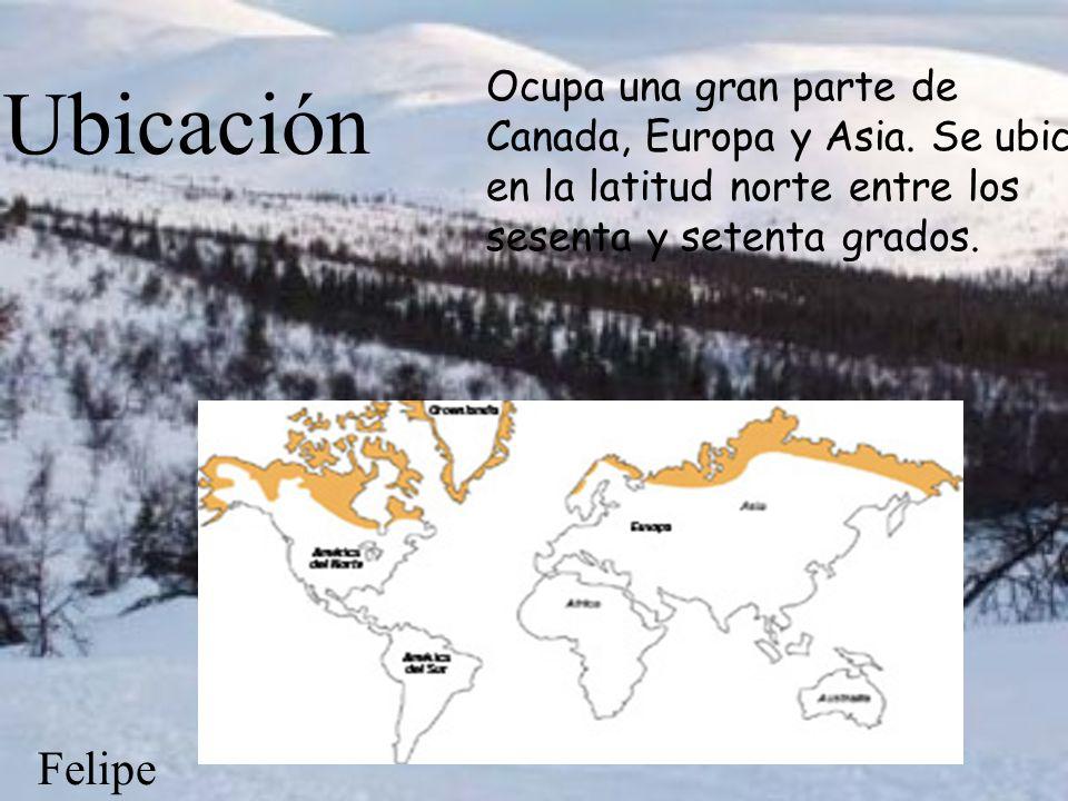 Ubicación Ocupa una gran parte de Canada, Europa y Asia. Se ubica en la latitud norte entre los sesenta y setenta grados.