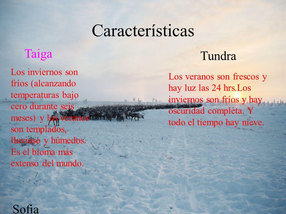Características Taiga Tundra Sofia