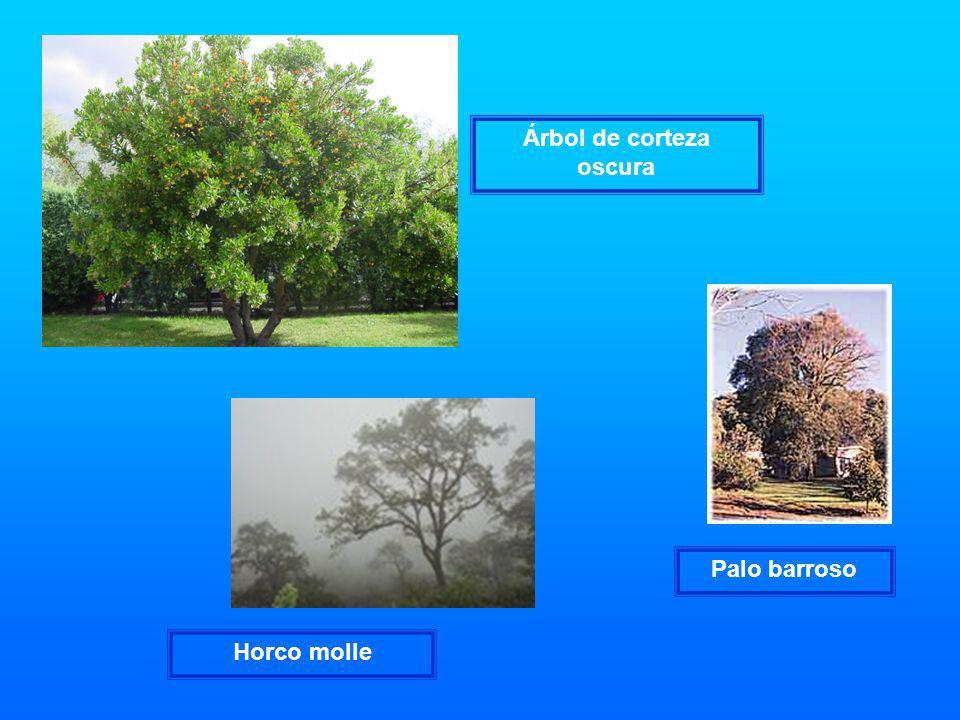 Árbol de corteza oscura