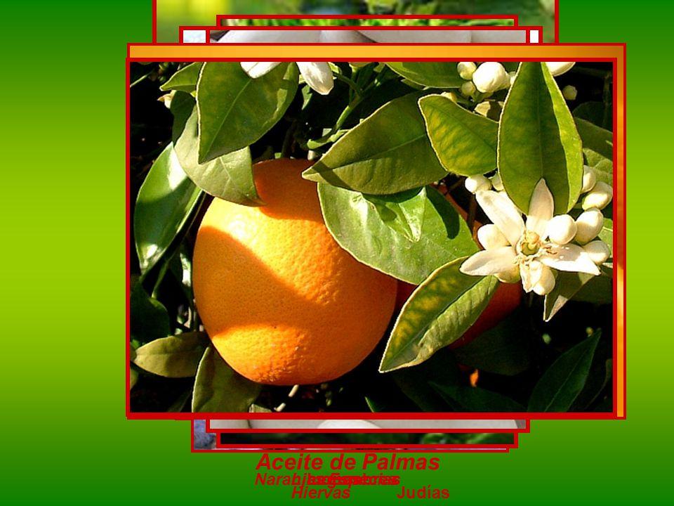 Aceite de Palmas Naranjas Limones Legumbres Especias Hiervas Judías