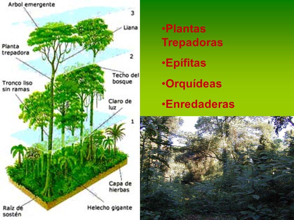 Plantas Trepadoras Epífitas Orquídeas Enredaderas