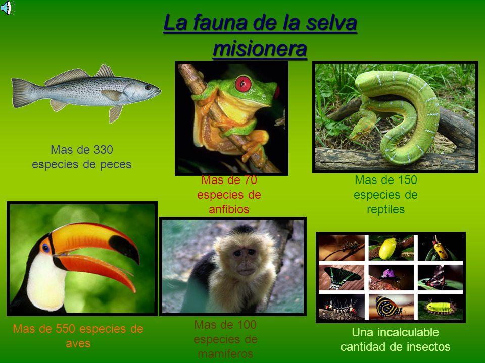 La fauna de la selva misionera