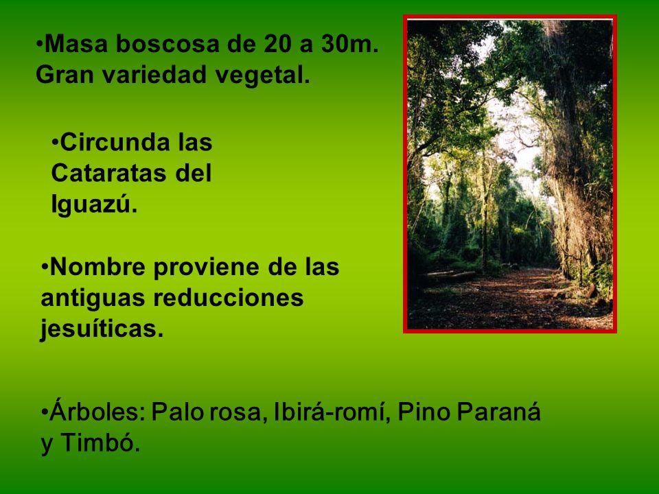 Masa boscosa de 20 a 30m. Gran variedad vegetal.