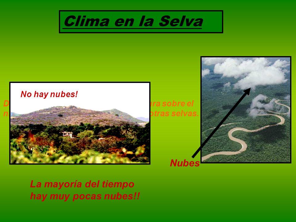 Clima en la Selva Nubes La mayoría del tiempo hay muy pocas nubes!!