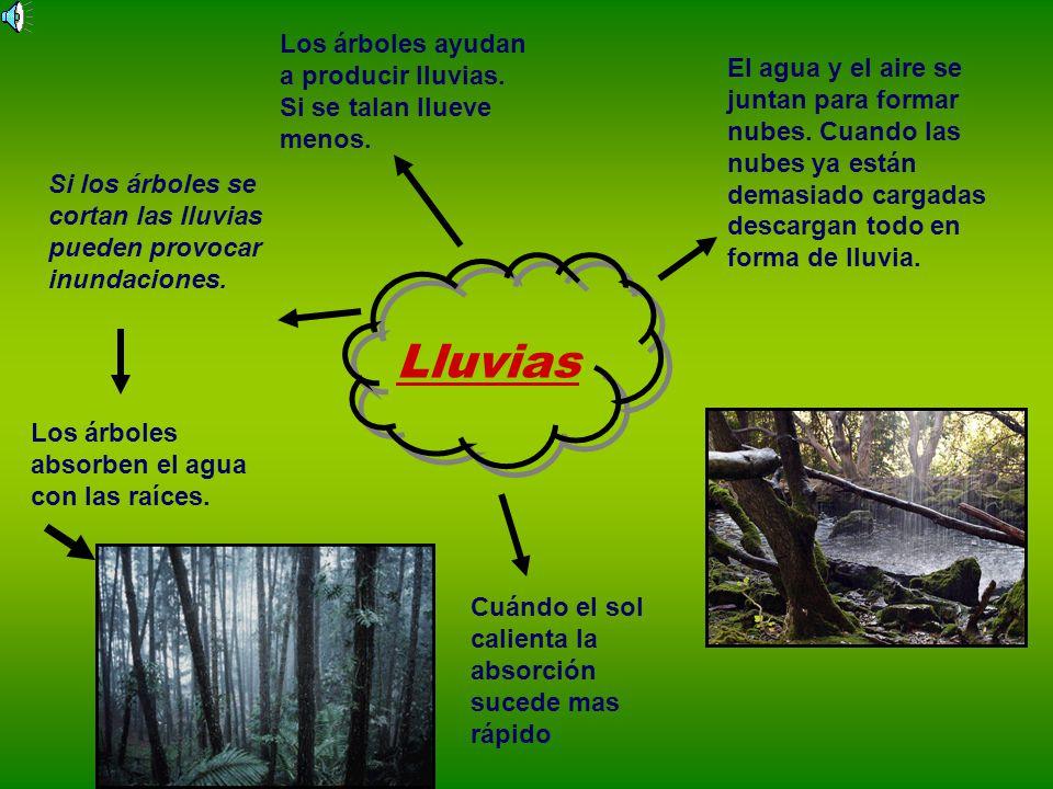 Los árboles ayudan a producir lluvias. Si se talan llueve menos.