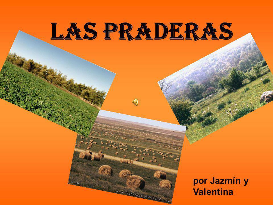 Las Praderas por Jazmín y Valentina