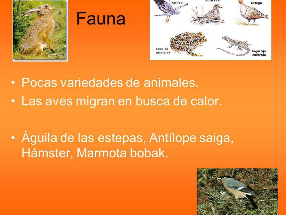 Fauna Pocas variedades de animales. Las aves migran en busca de calor.