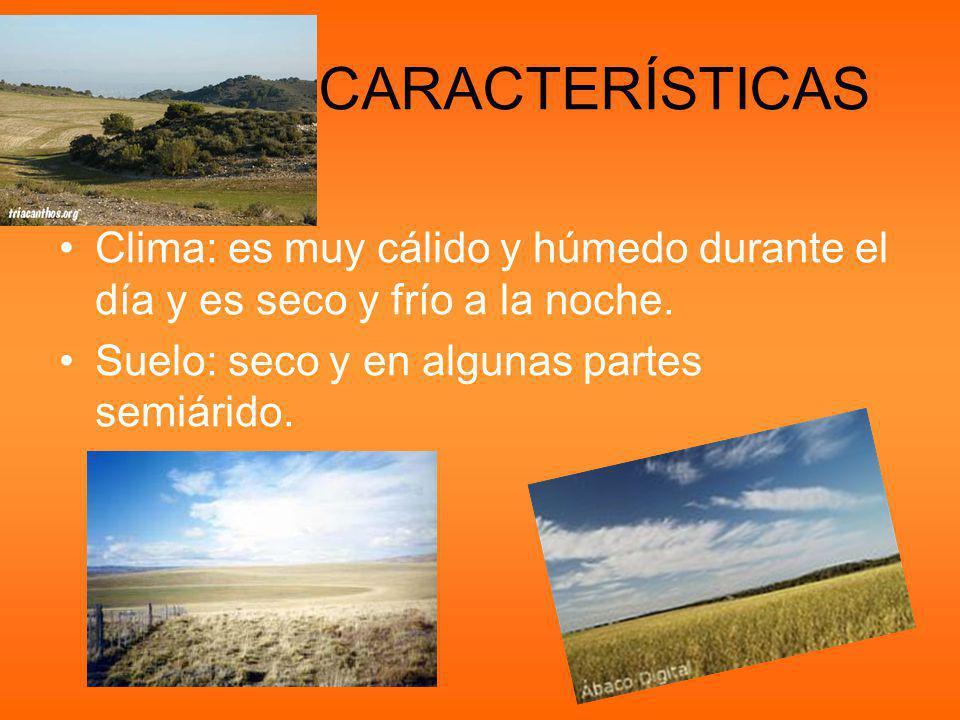 CARACTERÍSTICAS Clima: es muy cálido y húmedo durante el día y es seco y frío a la noche.