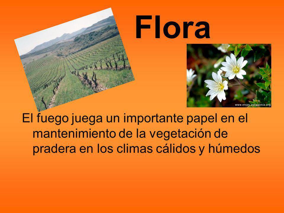 Flora El fuego juega un importante papel en el mantenimiento de la vegetación de pradera en los climas cálidos y húmedos.