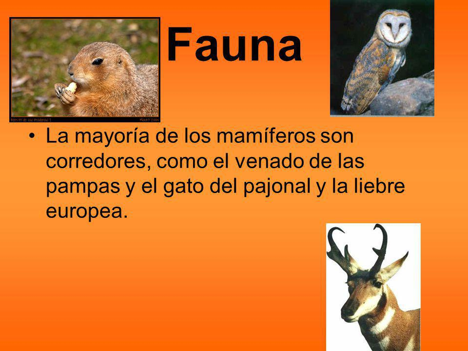 Fauna La mayoría de los mamíferos son corredores, como el venado de las pampas y el gato del pajonal y la liebre europea.