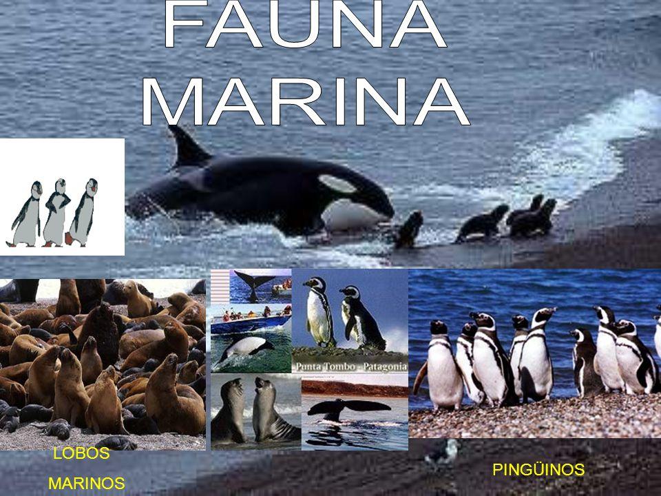 FAUNA MARINA LOBOS MARINOS PINGÜINOS