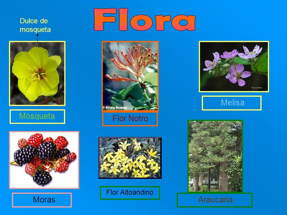 Flora Flor Notro Moras Dulce de mosqueta Melisa Mosqueta