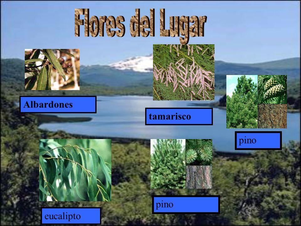 Flores del Lugar Albardones tamarisco pino pino eucalipto