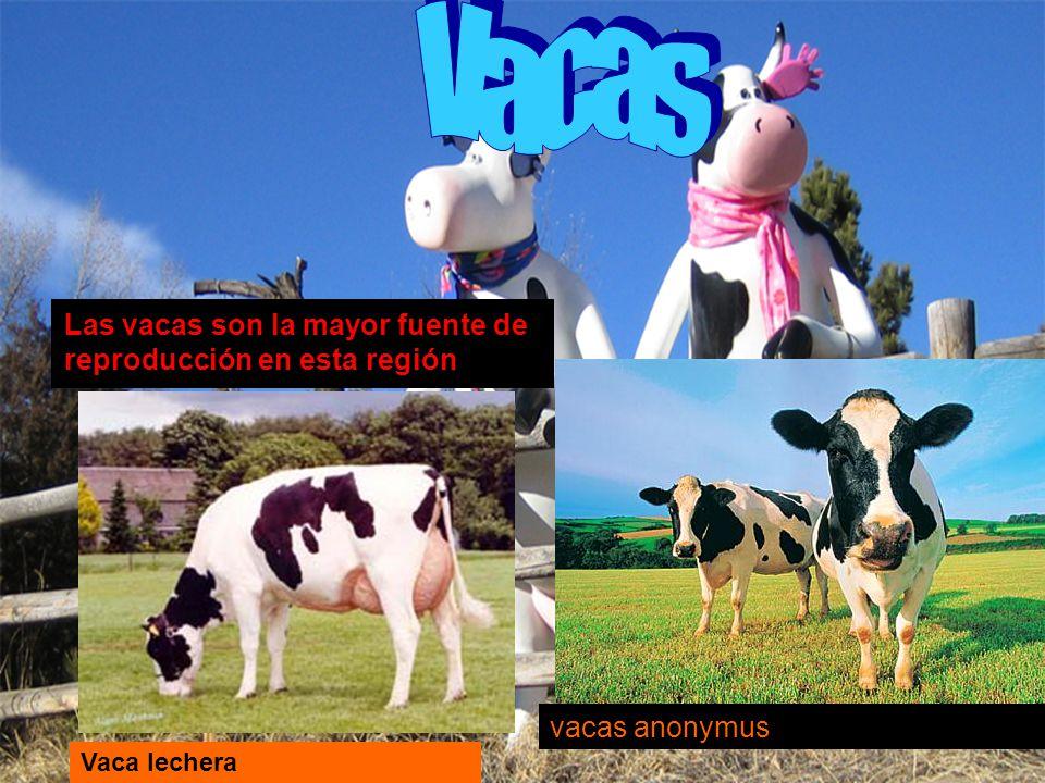 Vacas Las vacas son la mayor fuente de reproducción en esta región