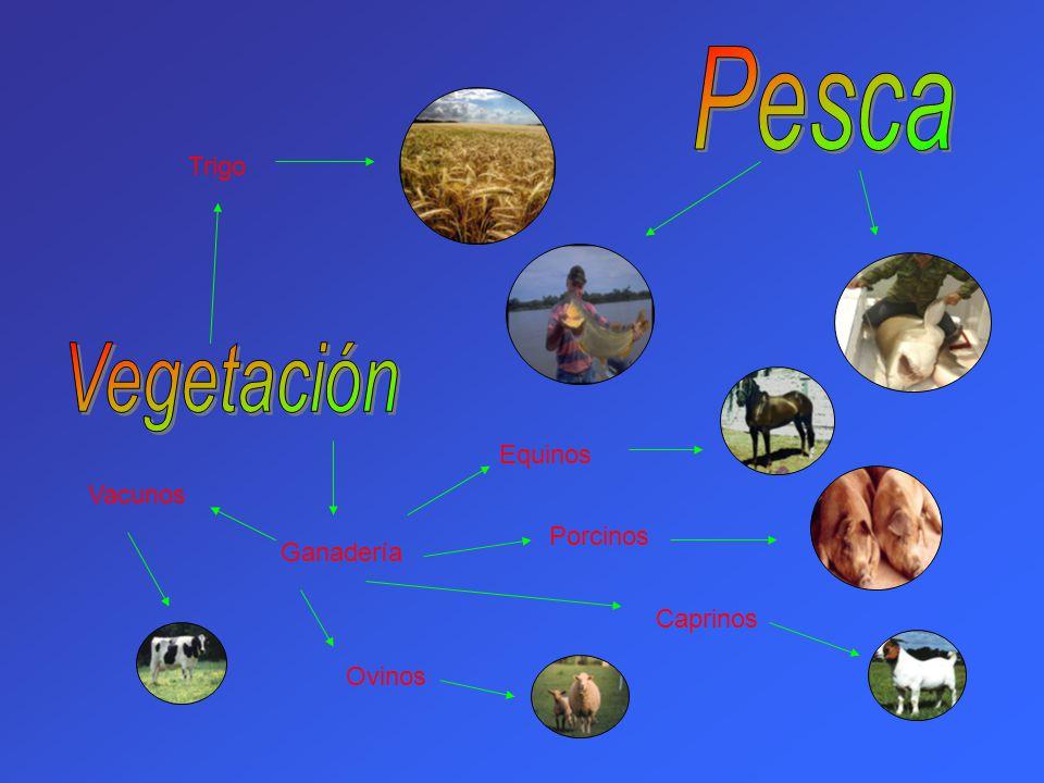 Pesca Vegetación Trigo Equinos Vacunos Porcinos Ganadería Caprinos