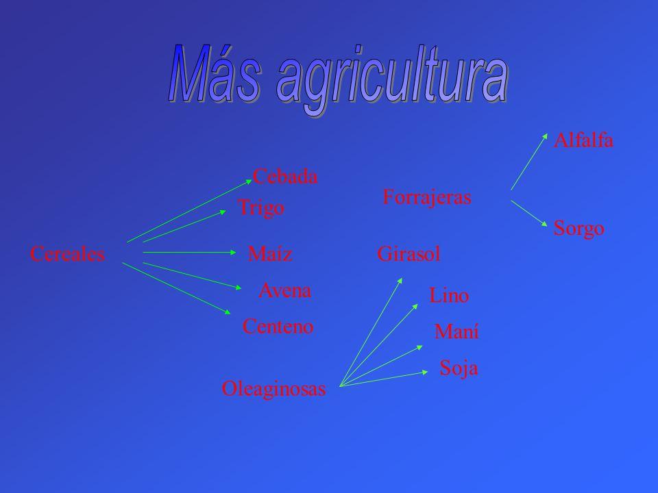Más agricultura Alfalfa Cebada Forrajeras Trigo Sorgo Cereales Maíz