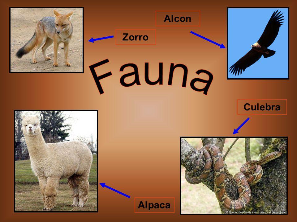 Alcon Zorro Fauna Culebra Alpaca