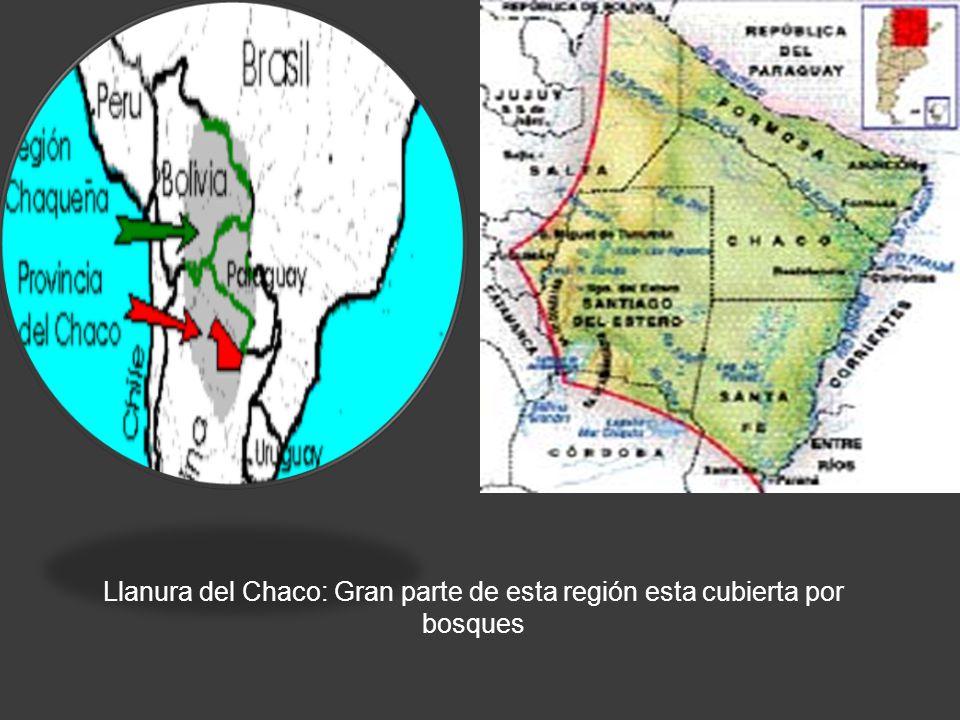 Llanura del Chaco: Gran parte de esta región esta cubierta por bosques