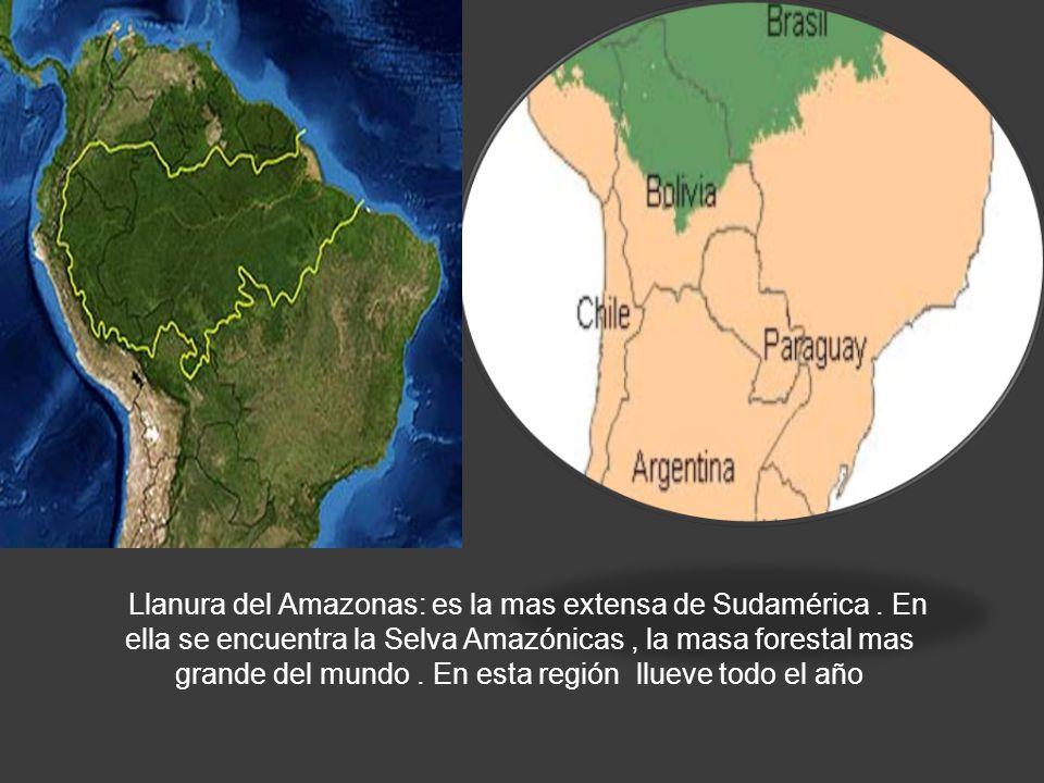 LLANURA AMAZONICA