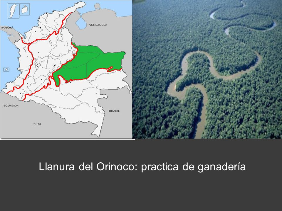 Llanura del Orinoco: practica de ganadería
