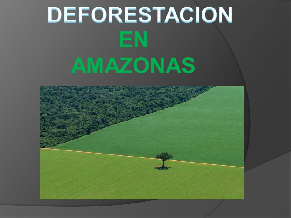 DEFORESTACION EN AMAZONAS