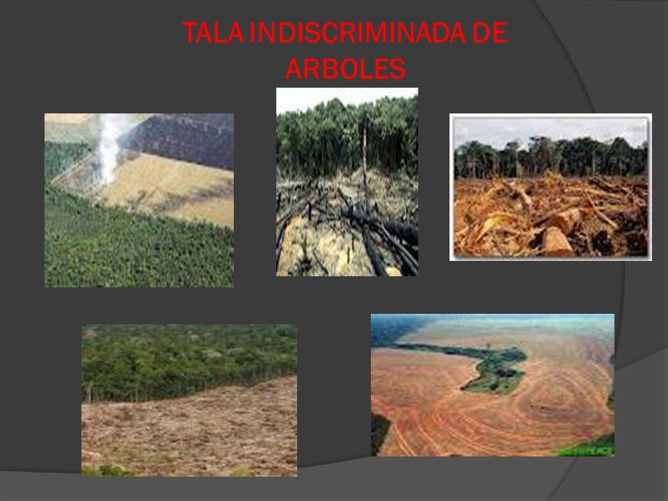 TALA INDISCRIMINADA DE ARBOLES