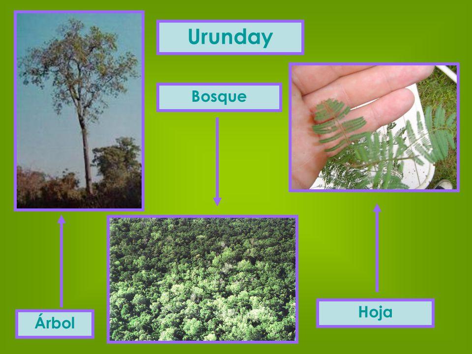 Urunday Bosque Hoja Árbol