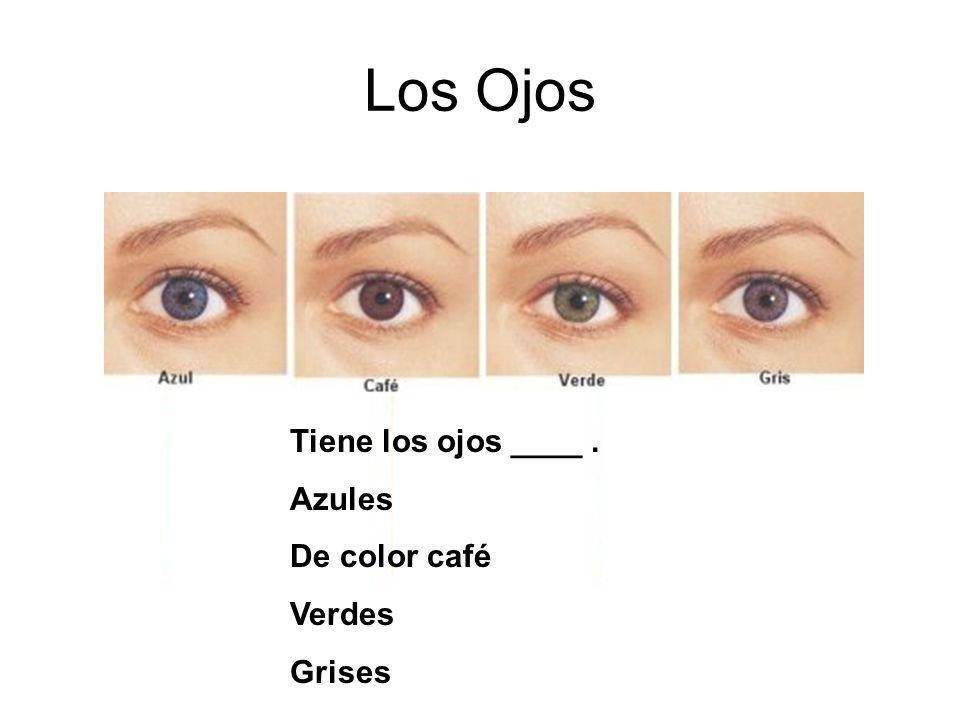 Los Ojos Tiene los ojos ____ . Azules De color café Verdes Grises
