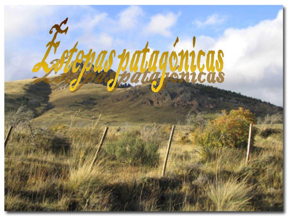 Estepas patagónicas